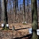 State park offers free maple syrup making events