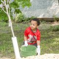 Trees provide many benefits to our community. When planting trees, select a diversity of trees that are well-suited to your growing conditions.