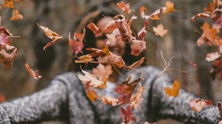 Expect a near perfect fall leaf season in Minnesota state parks and trails