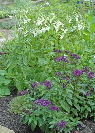 Garden your way to better health