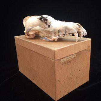 Hybrid Human-Animal Imaging with Xavier Tavera @ Can Can Wonderland | Saint Paul | Minnesota | United States