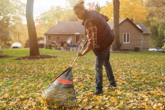 Don't throw away those leaves!